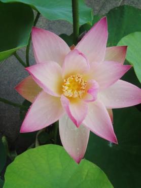 今年の開花一番