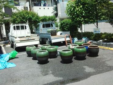 駐車場に到着した蓮の鉢 盂蘭盆会(お盆)には美しい蓮の華を見ることができます