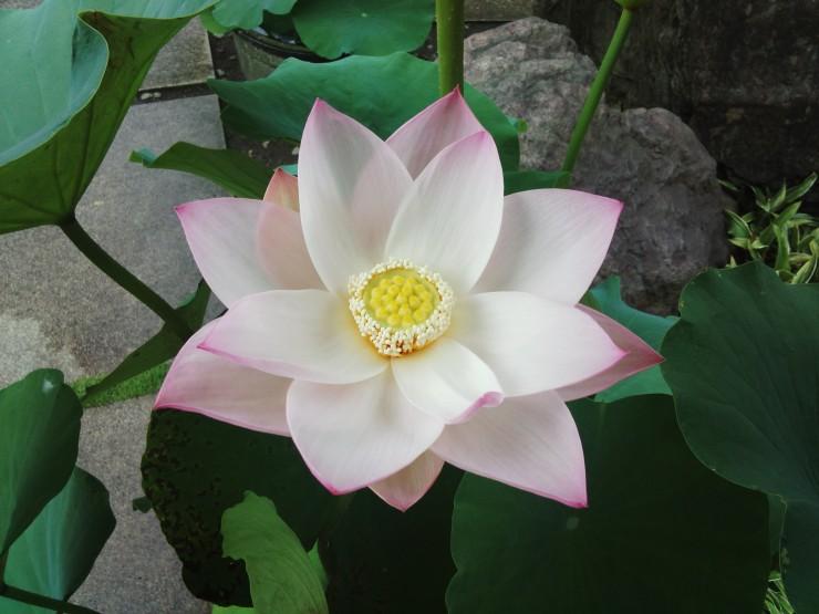 7月4日今年の開花1番
