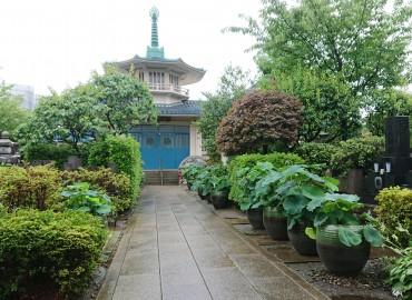 雨の福性寺です 蓮の葉は美しいです しかし、花はありません