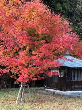 11月11日の日光清瀧神社の紅葉