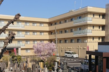 住職の住まい(庫裡・くり)から見た風景です 新設された老人ホームの前に墓地の江戸彼岸桜が見えます 200人余の高齢者の皆様が入所予定とお聞きしました