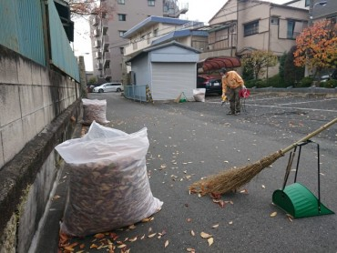 今日(11月20日)午前9時半ごろ 90リットルの袋3つのケヤキの葉が集まりました