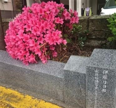 本日の駐車場の花壇
